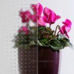 GLAS MASTER-CARRE